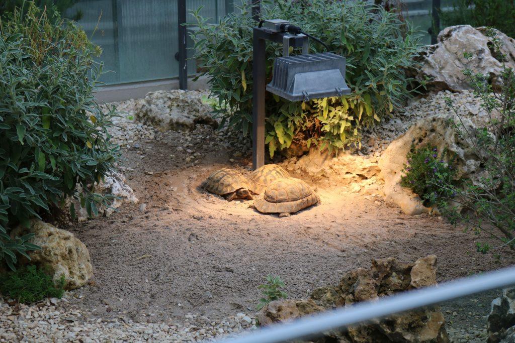 Wilhelma Stuttgart – Gehege der griechischen Landschildkröten